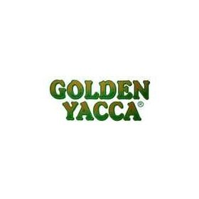 golden yacca