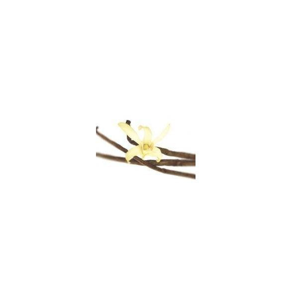 LAKHSMY Vanília rúd (40 g)