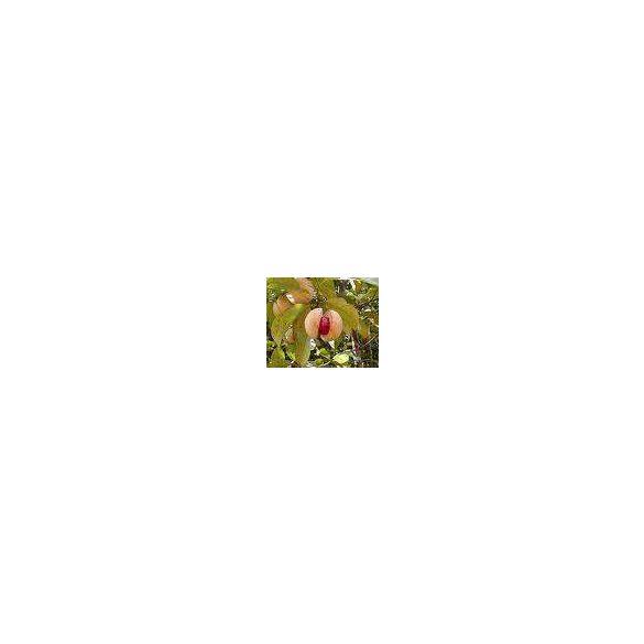 LAKHSMY Szerecsendió virág egész (10 g)